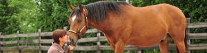 Pferd in Kontakt